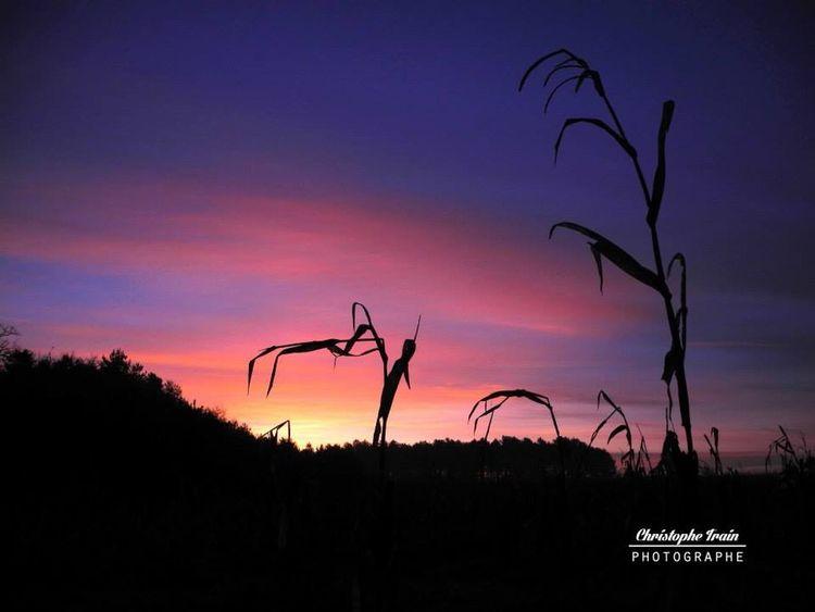 Lever de soleil en Sologne Photography Photographie  Ctprod Sunrise