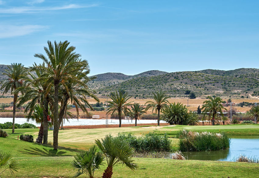 Golf field in Spain Field Golf Golf Course Palm Tree Summertime Day Golf Club Golfcourse Grass Green Color Green Lawn Lake Lawn Meadow Nature No People Nobody Outdoors Palm Tree Plant Sky Sport Summer Tree Tropical Climate