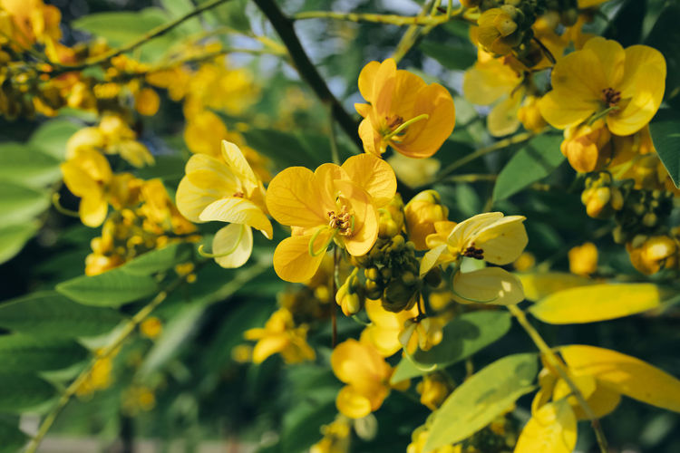 Flower Flowering Plant Yellow Plant Growth Beauty In Nature Close-up Petal Nature Freshness Day Outdoors Spring Leaf