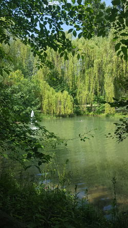 parco del centenario Milano Water Tree Backgrounds Full Frame Grass Standing Water Calm