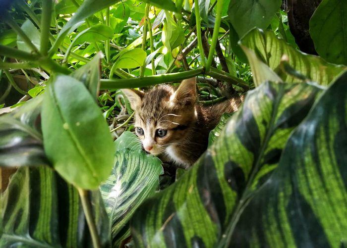 Kitten inside the bush Tree Leaf Portrait Cute Close-up Plant Green Color Animal Eye Cat Feline Kitten HEAD Domestic Cat Yellow Eyes