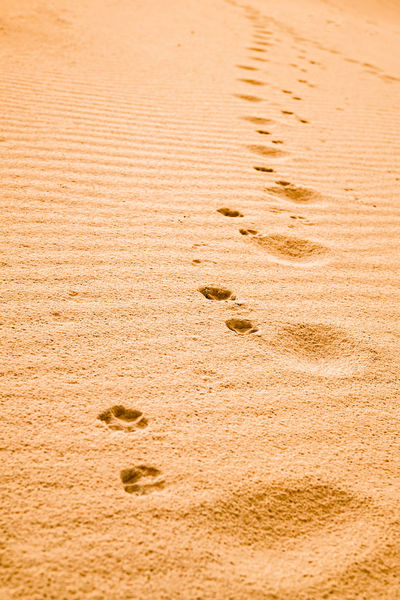Dog paw prints in the sand Dog Paw Paw Print Paw Prints In The Sand Traces Of Time Animal Track Beach Close-up Day FootPrint High Angle View Nature No People Outdoors Paw Print Sand Sand Dune Traces In The Sand Track - Imprint