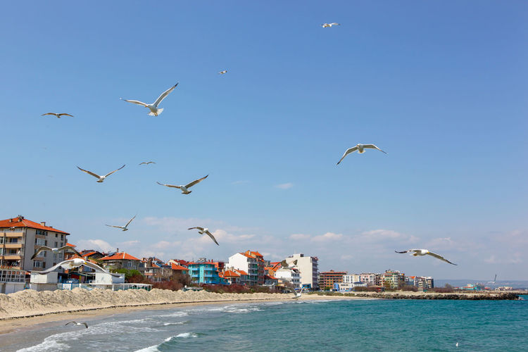 Seagulls Flying Over Sea On Sunny Day Flying Sky Vertebrate Bird Animal Themes Animal Animals In The Wild Animal Wildlife Water Building Exterior Architecture Group Of Animals Nature Built Structure Mid-air Blue City Day No People Seagull Flock Of Birds