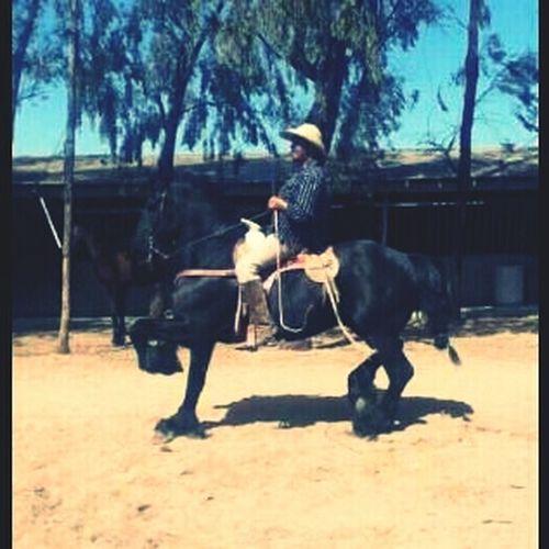 Frisian At The Ranch