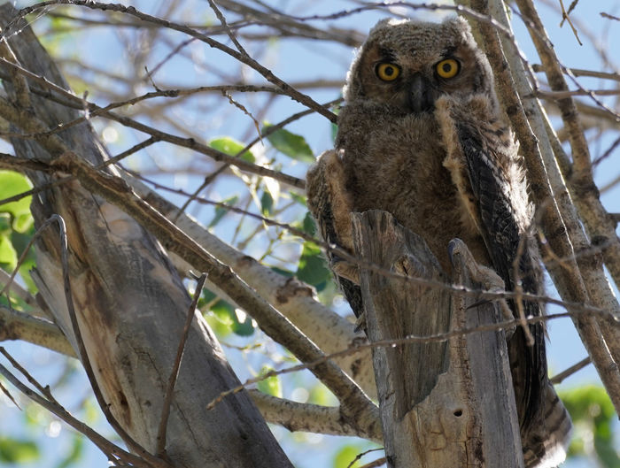 Low angle view of owl on tree