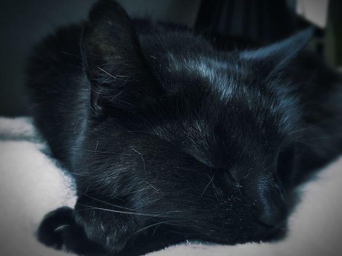 Black Cat Sleep Beauty Blackandwhite Soft Blanket Sleepy Kitty Kittycat Black Is Beautiful Chill Mode