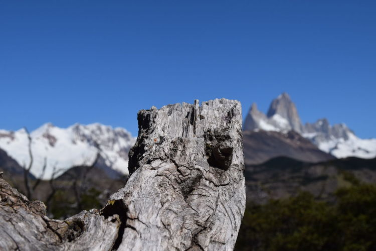 Close-up of dead tree by mountains against clear blue sky