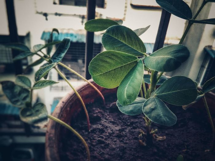Plant Indoors  Leaf No People Growth Nature Green Color Close-up Day Awesome_shots Nature Tree Portrait Leisure Activity Indoors  Domestic Life Winter Mornings Freshness Awesome Day Awesome_shot Awesome!!!!!!
