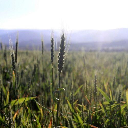 The Bekaa Valley