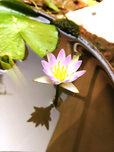 Lotus♥ Beauty In Nature Freshness My Nature's Gallery