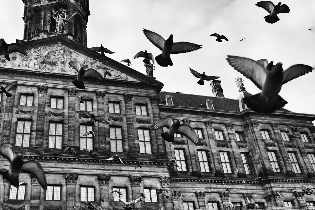 Low Angle View Of Birds Flying In Front Of Building Against Sky