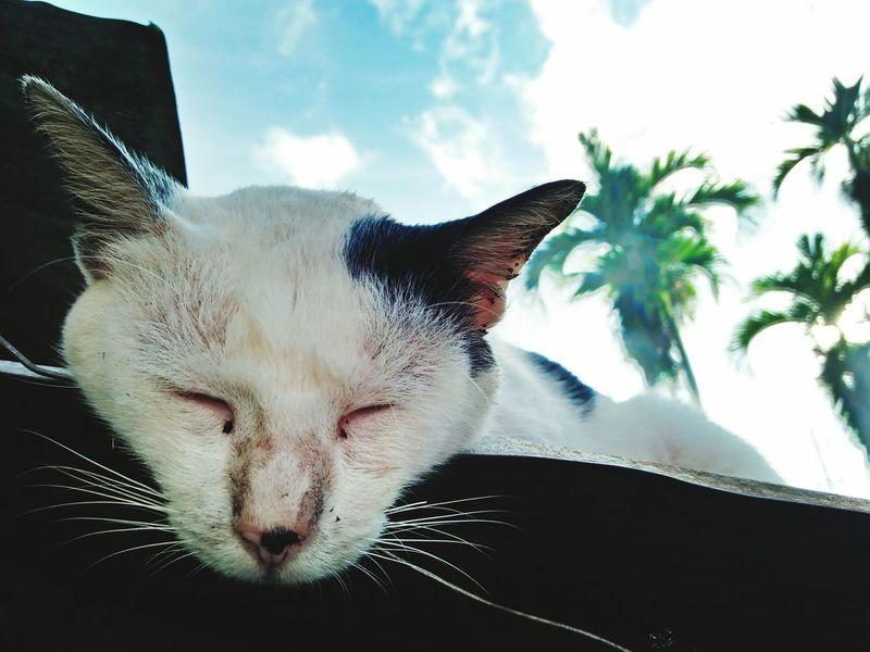 Pet Portraits Sleeping Cat Cats 🐱 Pets