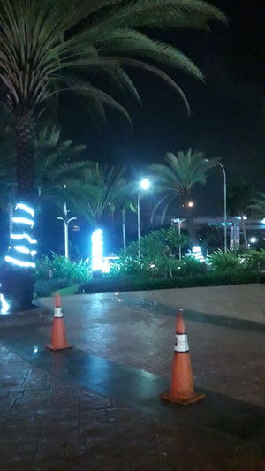 jakarta utara Illuminated Tree Street Light Traffic Cone Sky Electric Light