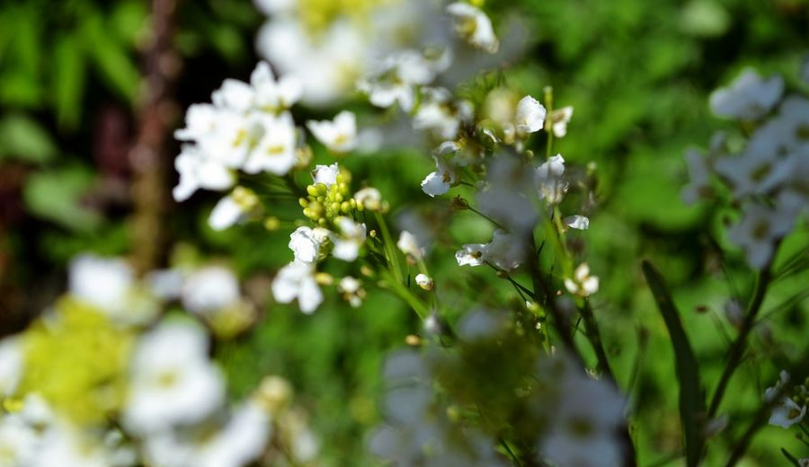Beauty In Nature Blooming Close-up Day Flower Fragility Freshness Growth Nature No People Outdoors Plant Tree White Color EyeEmNewHere