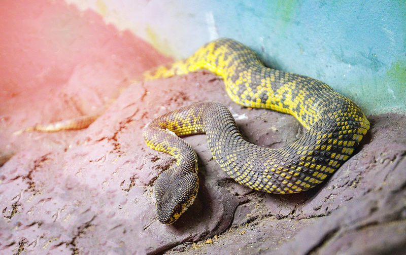 High angle view of snake on rock in zoo