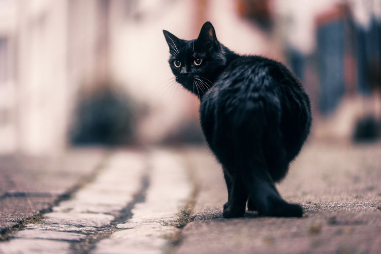 A little cat we met yesterday on our walk through our hometown City EyeEm Nature Lover Taking Photos Animal Themes Black Color Blackandwhite Close-up Day Domestic Animals Domestic Cat Feline Full Length Looking At Camera Mammal No People One Animal Outdoors Pets Photography Portrait Urban
