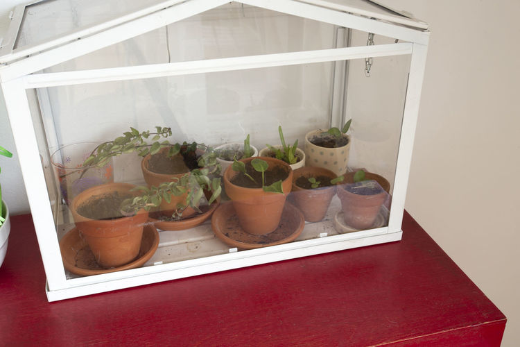 High angle view of potted plants on window sill