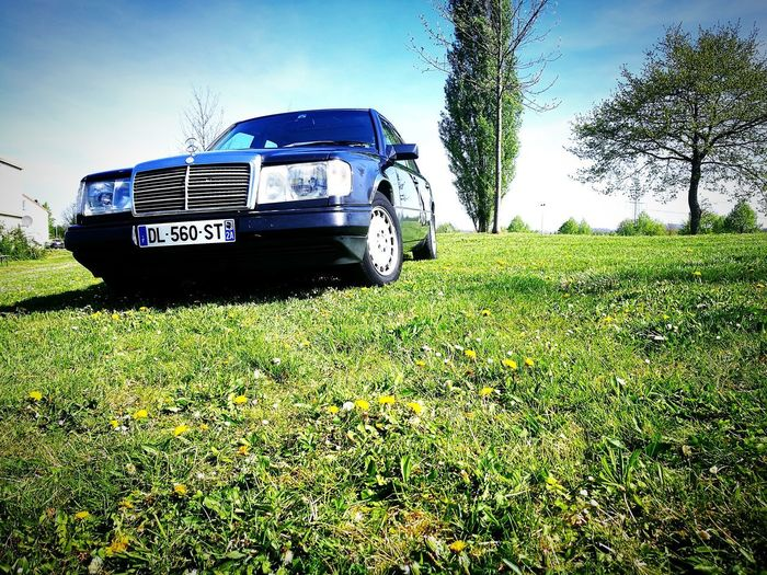 Starline One - MB W124 it's spring 02 Car Outdoors Beauty In Nature Nature Tree Day Sky No People