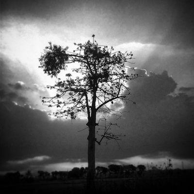 Bukan pohon yg berumur ratusan tahun, dan berharap menjadi pohon yg berusia ratusan tahun Jagapohon Saveearth Oldtree @natgeo