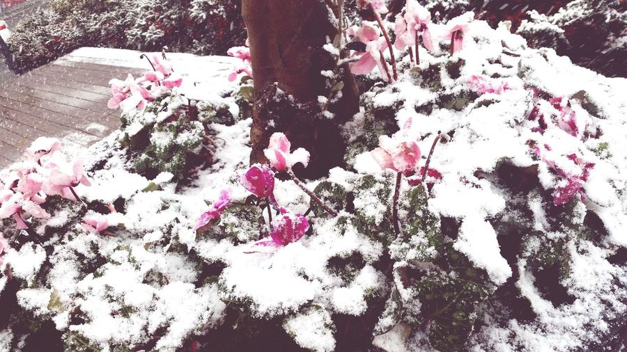 Snow Flowers Socute💕 Cold Days ı'm Working Have A Dinner Trump Towers