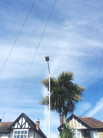 No People Open Air Sky Palm Tree Cable Low Angle View Tree Day Outdoors Electricity  Nature Skyscape Cloudscape Sky Lines Freedom Summer Summertime Tropical Blue Sky Holiday Travel London