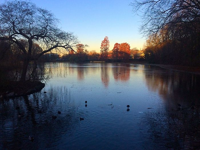 Brussels at winter Park Lake Frozen Sunset Cold Brussels Nature Photography Water Reflections Trees Nature Walking Around YOLO ✌ Sky Outdoors Tranquil Scene Beauty In Nature No People Water Bird