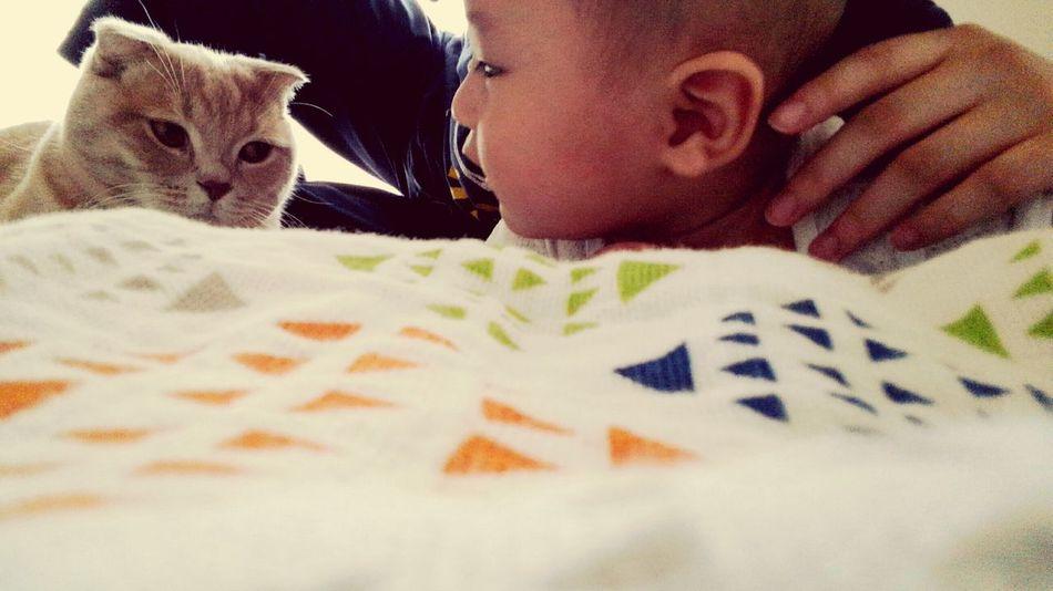 Day Hello World とっちゃん アラタボーイ Cats Baby まあまあ、仲良し