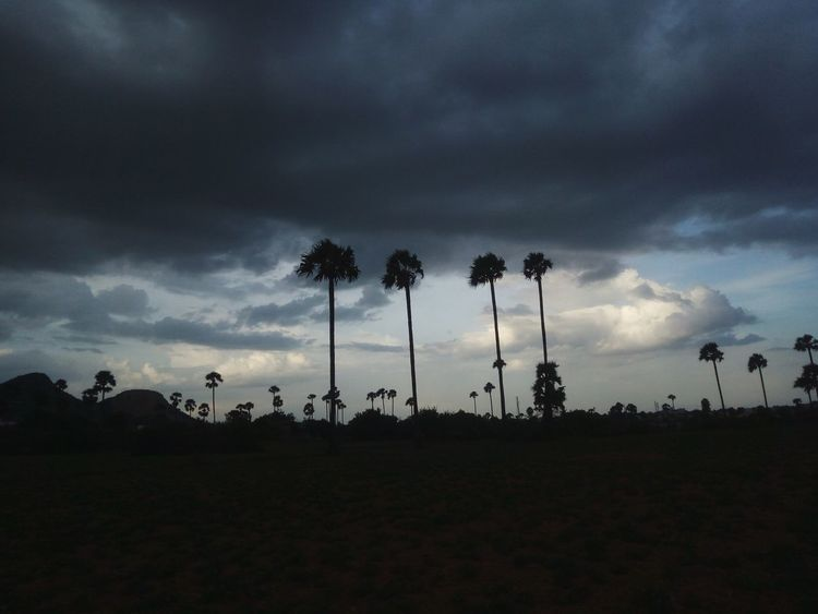 Nature Palm Tree Beauty In Nature Cloud Sky Landscape Palm Tree Tranquil Scene Tranquility Sky Scenics Silhouette Landscape Dusk Tree Beauty In Nature Tall Growth Low Angle View Nature Tree Trunk Dark Tall - High Mountain Dramatic Sky Cloud First Eyeem Photo
