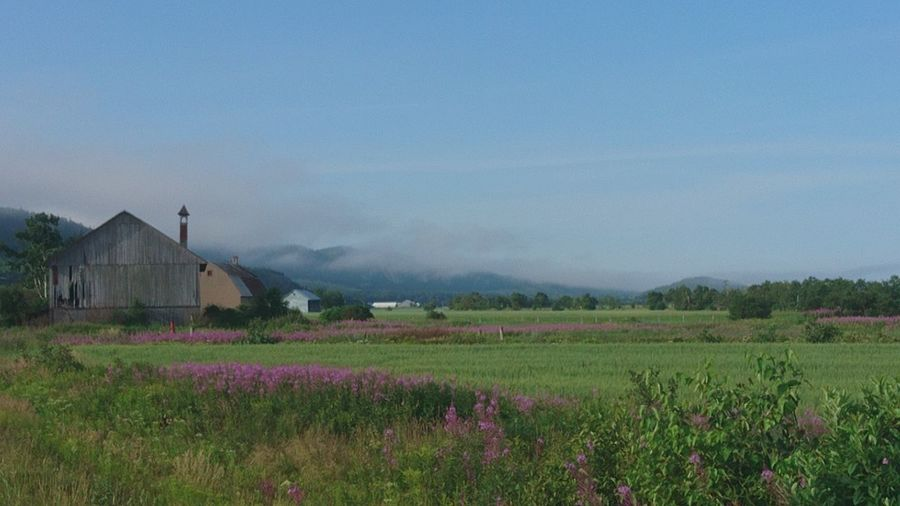 Barn Landscape Wildflowers Moutains Foggy Landscape