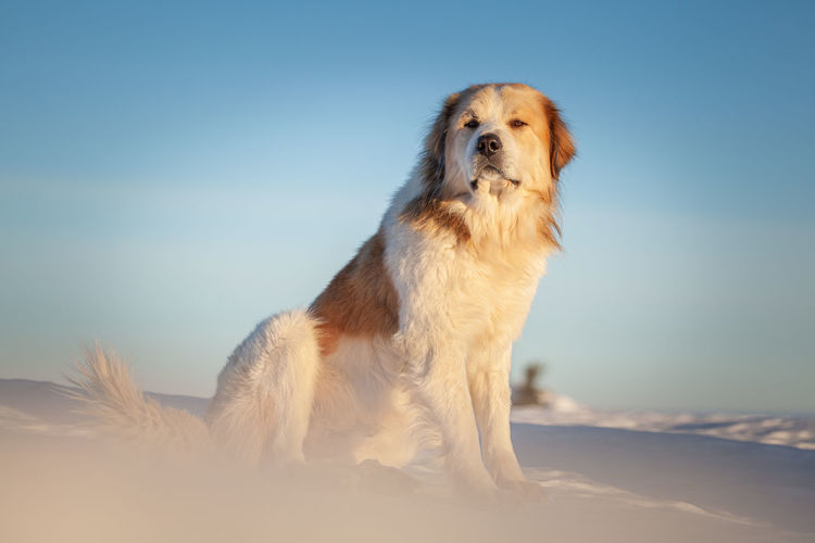 Dog looking away while sitting on land against sky