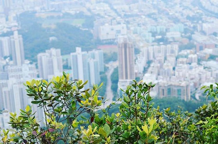 When you try to look at the city, but the nature pulls you back.. Theworldguru Travelgram Traveldiary Instatravel Travellovers Travelalone Instapic Instagood Nature HongKong Hike Trail Sundaymorning Sunday Winter Mist Misty Morning Awesome Awesomeecaptures Imaginelandscape
