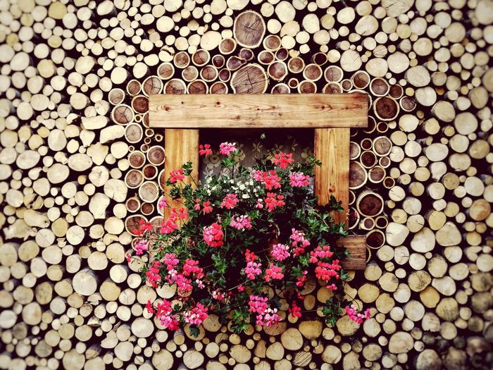 Flower Outdoors No People Nature Day Window View Window Flowers Flower Collection Flowers, Nature And Beauty Flower Photography Nature Beauty Beauty In Nature Wood - Material Wood Mountain EyeEmNewHere EyeEm Best Shots EyeEm Selects EyeEm Nature Lover Trunks Trunk Tree