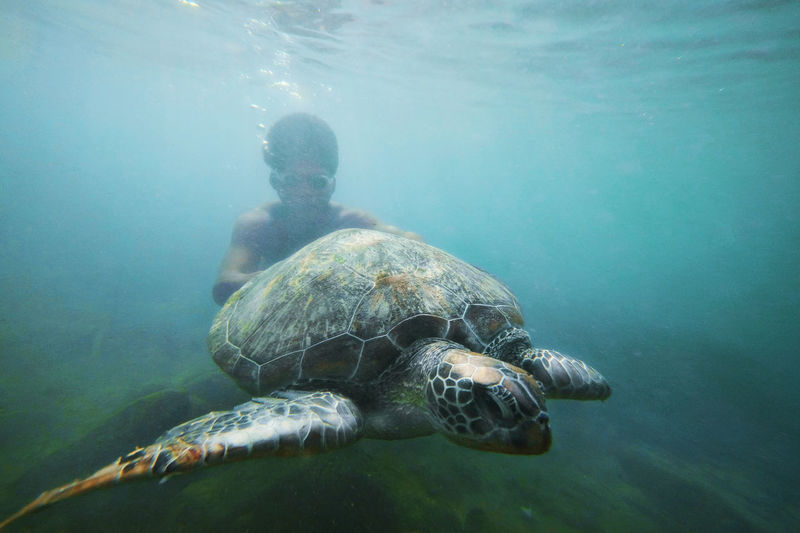 Young man swimming with turtle undersea