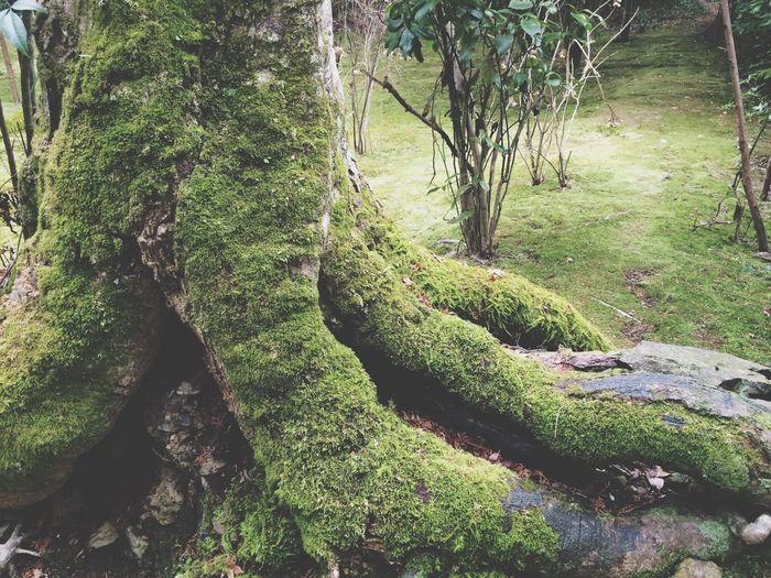 苔寺 Moss Japanese Temple