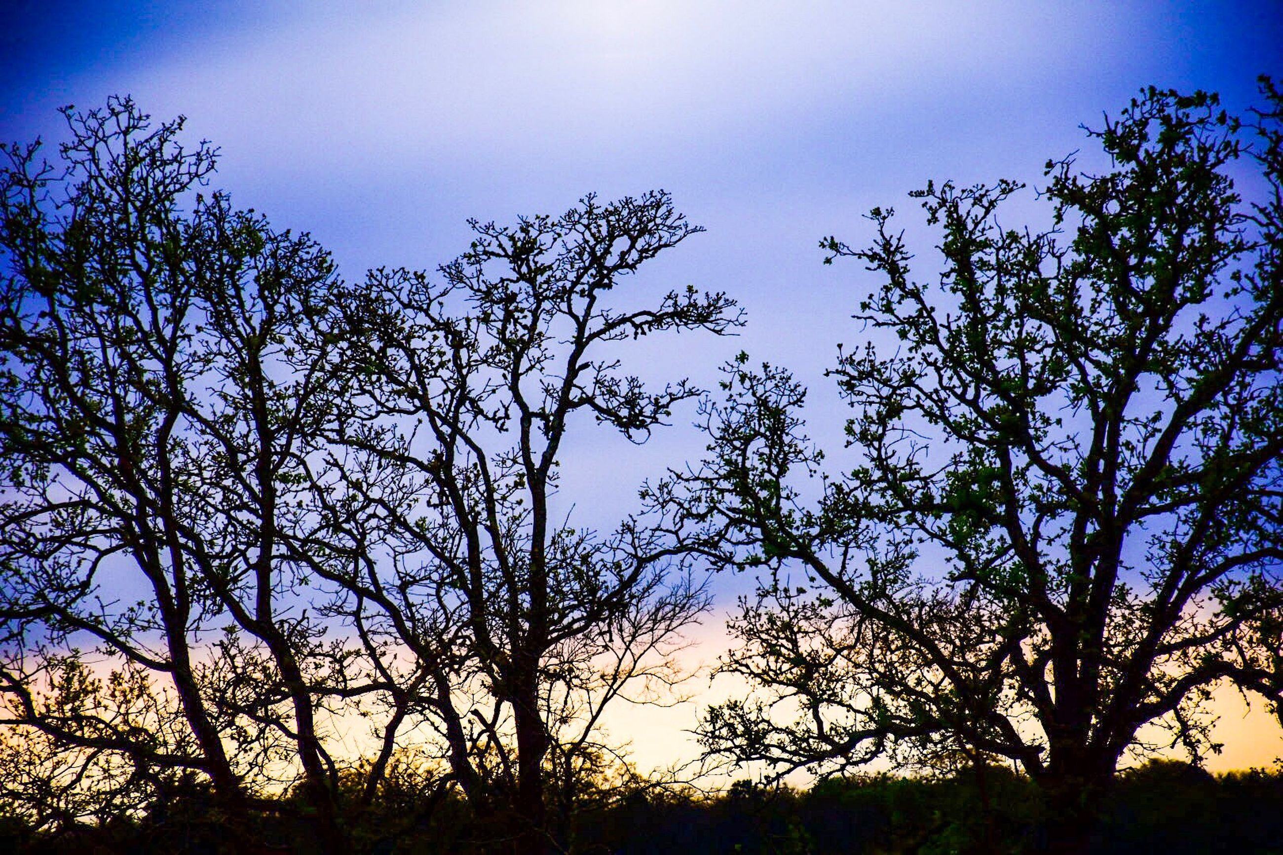 nature, sky, low angle view, growth, no people, tree, beauty in nature, silhouette, outdoors, tranquility, sunset, scenics, day