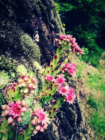 Rainy day Flower Wild