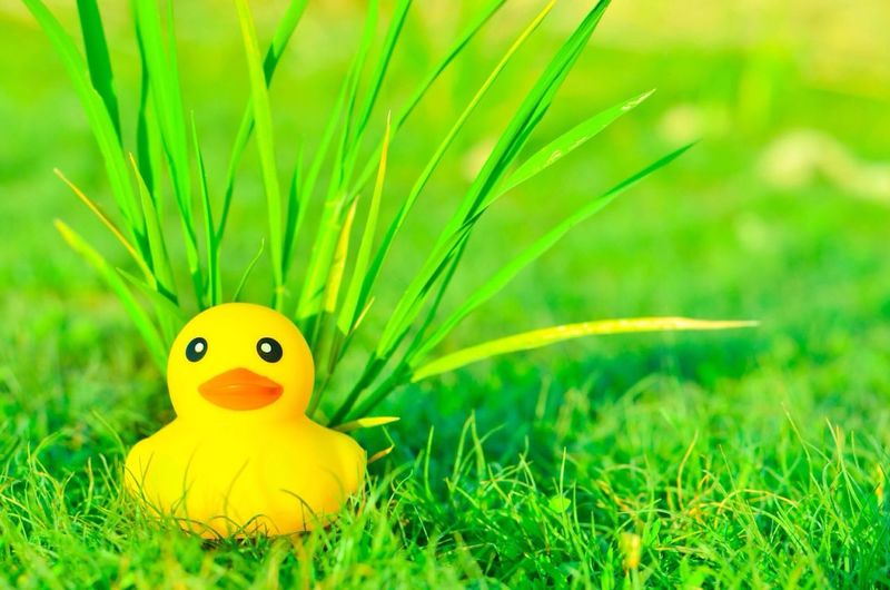 Yellow dug rubber on green grass Grass Green Color Toy Field Selective Focus No People Close-up Yellow Growth Day Outdoors Nature Cute Abstract Photography Toys In The Attic Space Toyphotography Morning Light