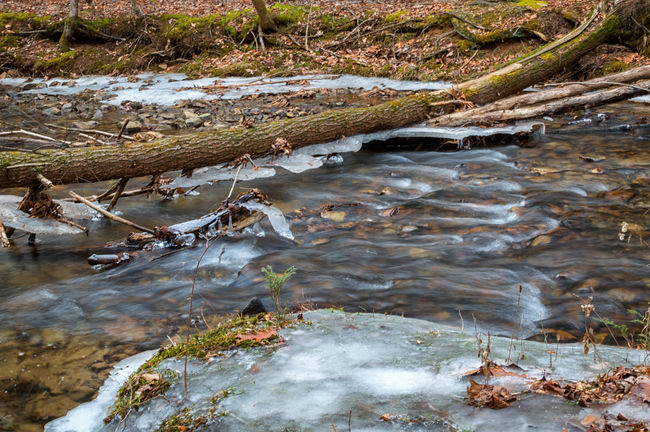 Flowing Creek Creek Mountain Stream Long Exposure Flowing Water Pennsylvania Beauty Pennsylvania Mountain Creek Nature Photography Outdoor Photography Naturelovers Winter Frozen Snow Water Nature Day No People Outdoors Beauty In Nature Tranquility Scenics