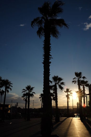 Barcelona Holiday Light And Shadow Night No People Outdoors Palm Tree Sightseeing Silhouette Sky Street Summer Sun Sunny Sunset Tree Vacations