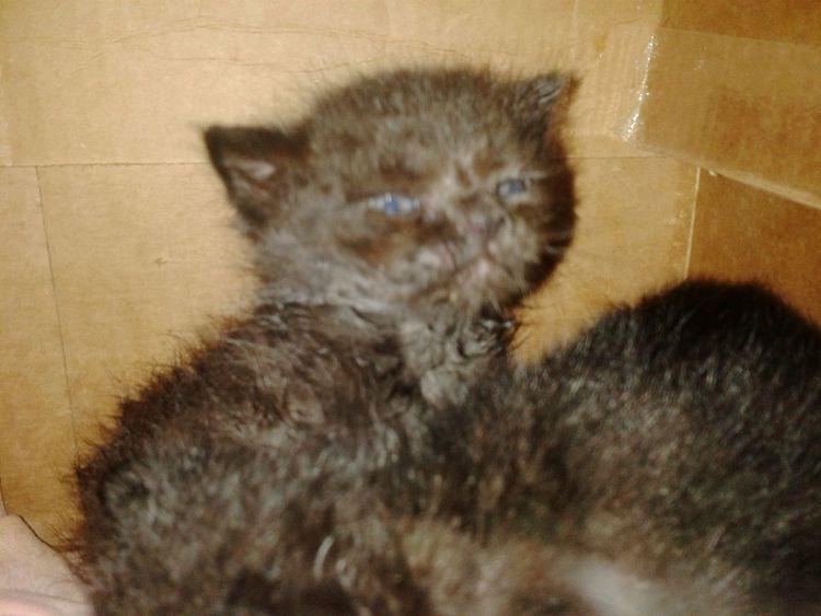 Pet Portraits Kittens Black Kitten Cats In A Box Cute Pets Skittles Ambrosia;) Pandora ❤