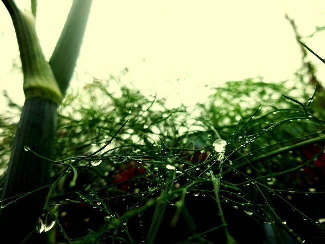 Nature Photography Nature_collection Naturelovers Nature_perfection Rainny Day Raindrops Clody Day Raining Again