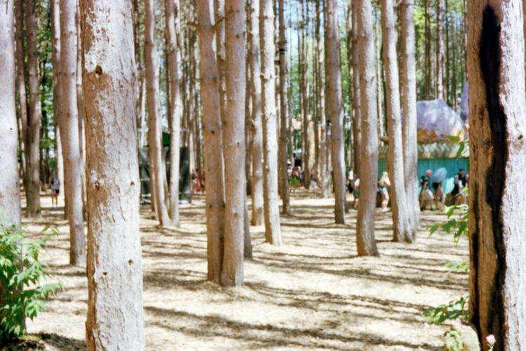 Into the Forest Camping Dj Film Kodak Michigan Music No Filter Yashica Art Edm Electric Forest Festival Film Photography Forest Free Spirit Kodak Portra Music Festival Summer Vibes