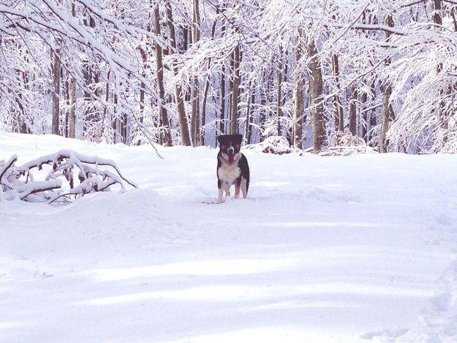 The wolf! Myguardianangel Mydog♡ Snow Day