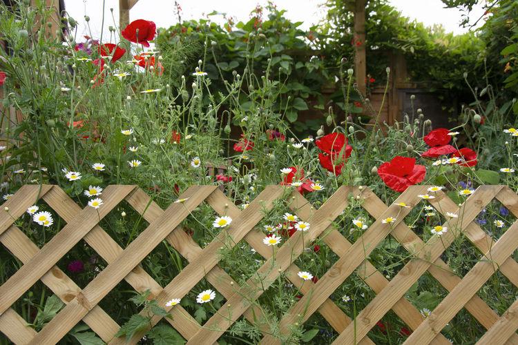 Red flowering plants in yard