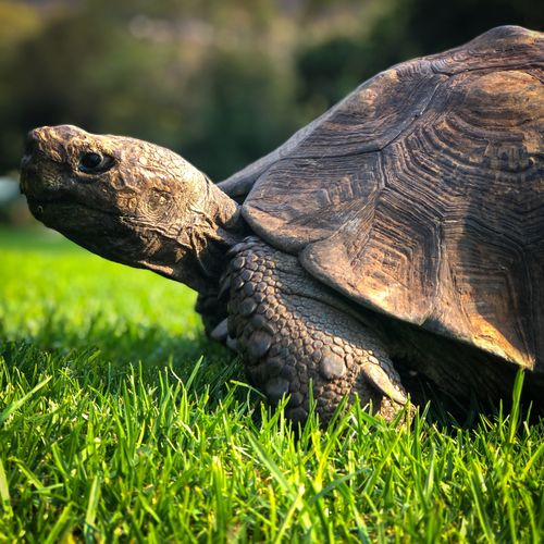 Every time I go to #waltersisulubotanicalgardens I find my tortoise friend. This time he decided to pose for me. Don't you think he's cute? Grassy South Africa Walter Sisulu Botanical Gardens Wild Life Posing Eating Grass Chilled Tortoise Shell Tortoise Nature Moments Botanical Gardens Naturegram