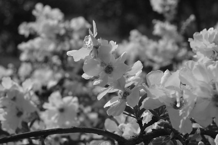 Fleurs Blackandwhite News First Eyeem Photo