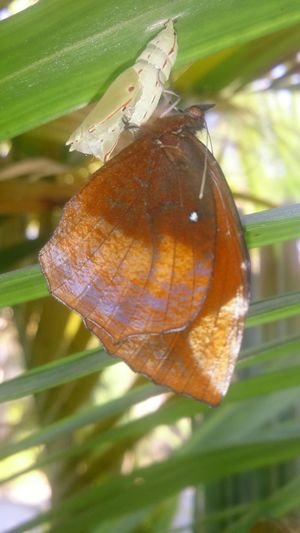 Butterfly Ready