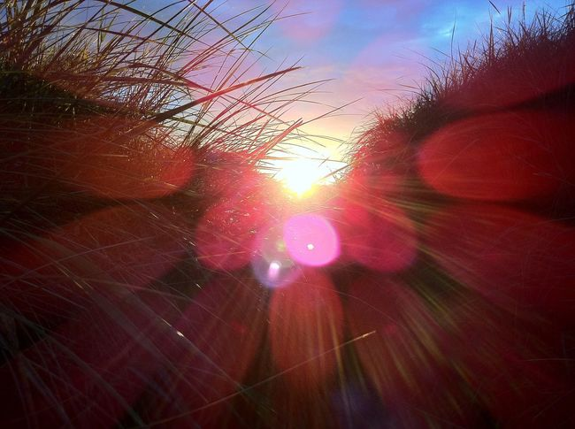 Sun Growth Lens Flare Sunlight Plant Grass Close-up Nature Beauty In Nature Sky Outdoors Scenics Selective Focus Sunbeam Glowing Uncultivated Tranquility Tranquil Scene Field Cloud - Sky