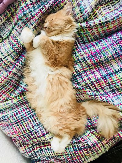 Cat Mammal Animal Themes Animal One Animal Domestic Animals Domestic Pets High Angle View Textile Relaxation Blanket Lying Down Indoors  Sleeping My Best Photo