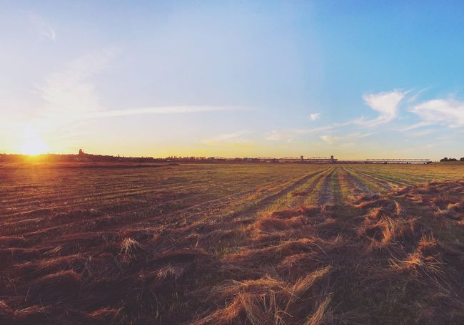 Tczew's meadow 🌾 Meadow Tczew Bridge Nature Poland Vistula Wisła IPhone IPhoneography Field Landscape Scenics Sky Tranquility Nature Horizon Over Land Outdoors Sun Beauty In Nature Tranquil Scene Cloud - Sky Distant Non-urban Scene Diminishing Perspective Agriculture